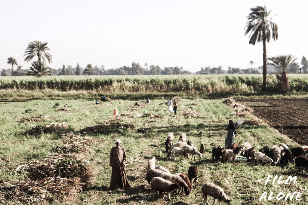 Farmers working the land alongside the Nile