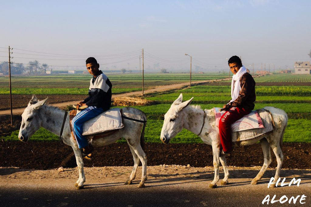 Boys on donkeys, Egypt