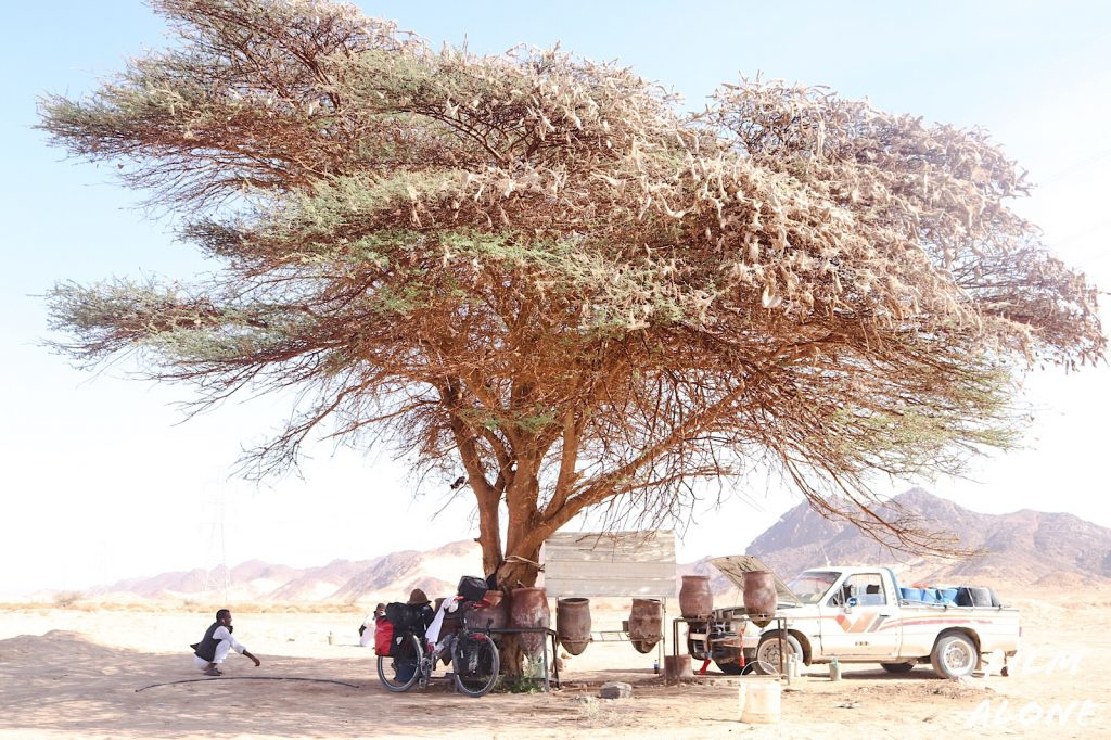 Taking shade - North Sudan